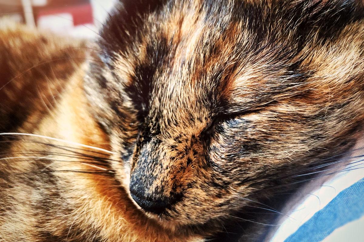 Kleine Helden des Alltags: Das Katzenfutter